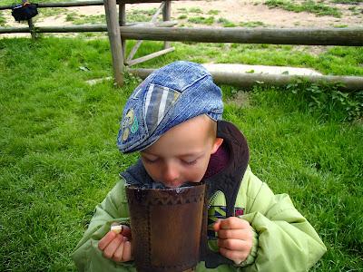 Smardz stożkowaty, Morchella conica, smardzowanie, Orawa, Słowacja