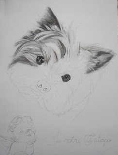 Le blog animalier portraits d 39 animaux - Dessiner un yorkshire ...