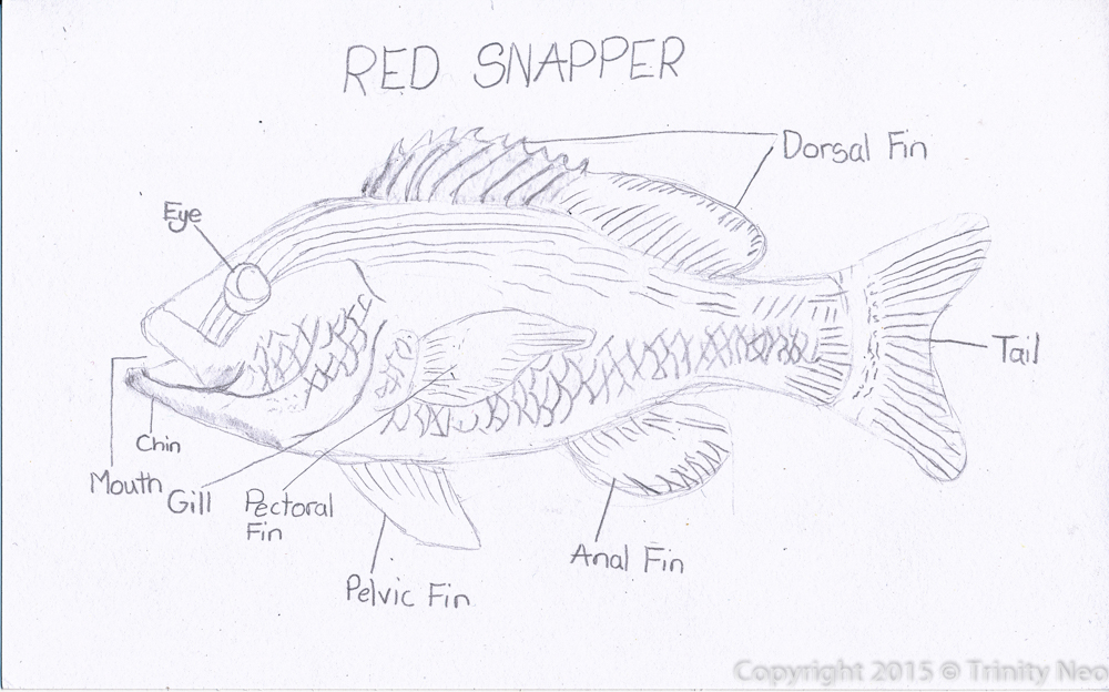 A Little Dose Of Me Anatomy Of A Fish