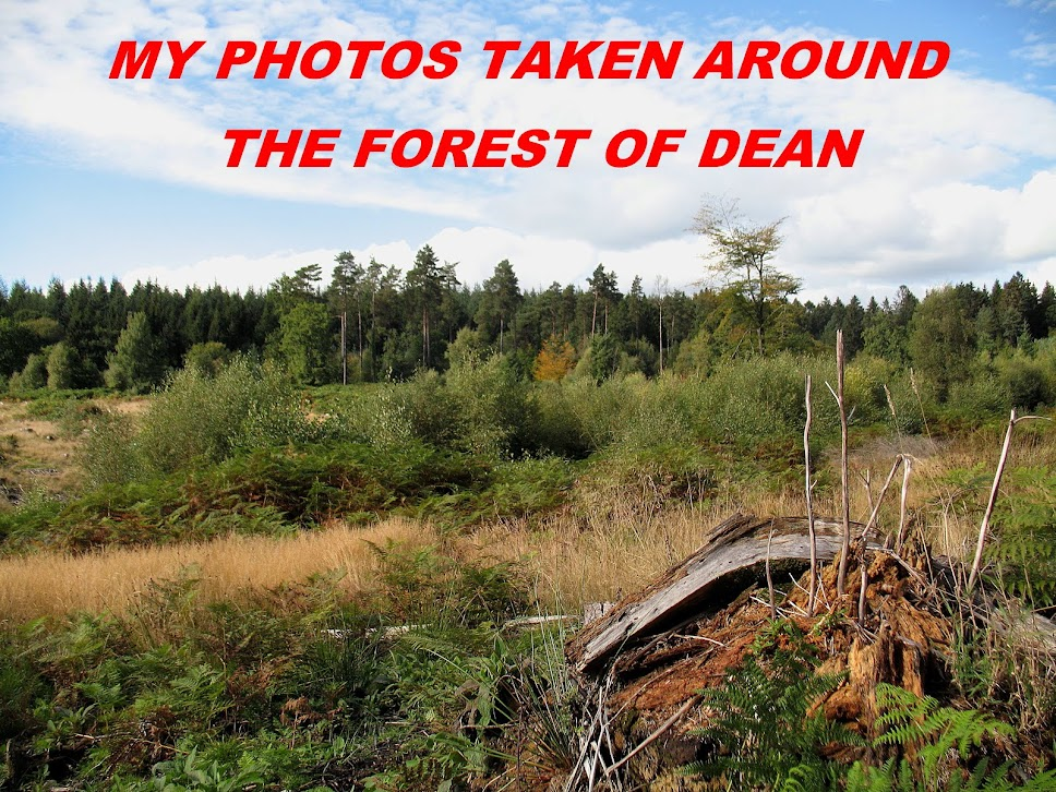 My photo's taken in and around the Forest of Dean