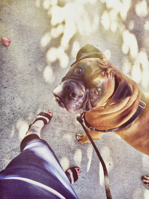 catherine masi and mars the dog
