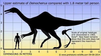 Deinocheirus dimensions