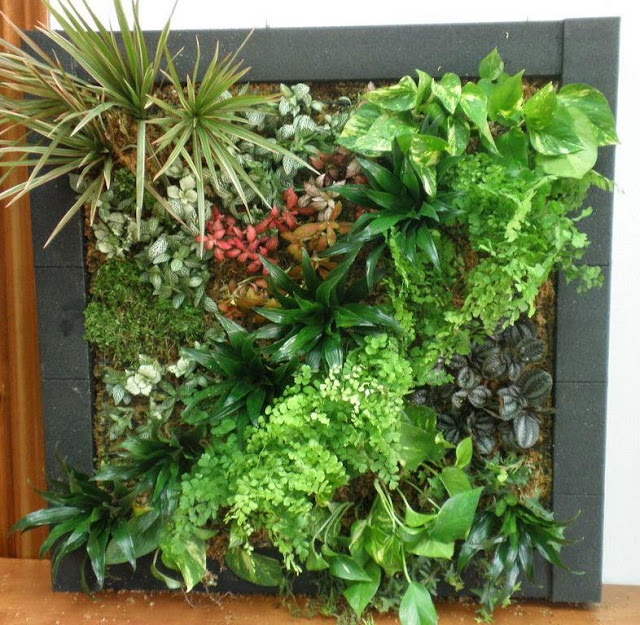 curso madrid jardines verticales