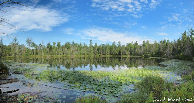 forst lake, pond, huron national forest, lake, clouds, lillypads