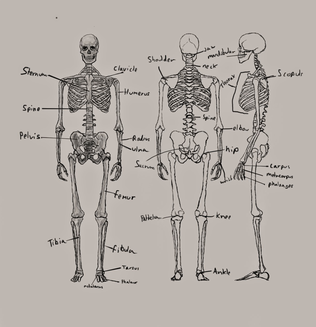 Computer Games Arts Anatomy Assignment