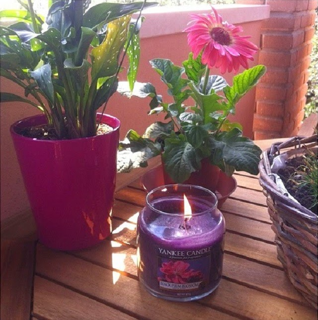 yankee candle, black plum blossom
