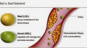 Manfaat Kolesterol dalam Tubuh