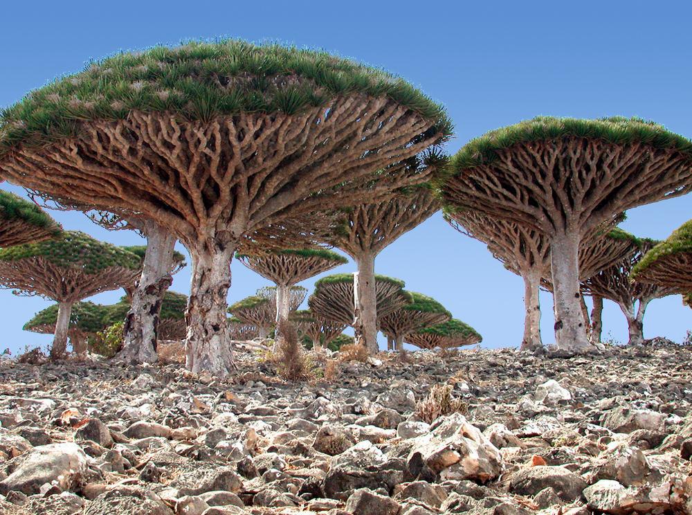 Socotra Island Beach