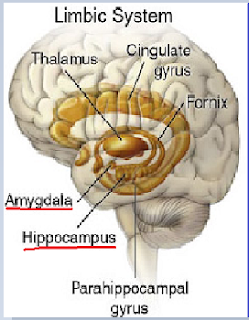 limbic,system,amygdala,fear,emotion, hippo-campus,parahippocampal,gyrus,fornix,cingulate,gyrus,mental disorder,abnormal,brain structure,size,grey matter,brain.pychology,borderline personality disorder,BPD,emotional unstable personality disorder,emotionally