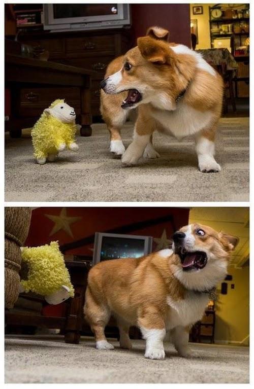 Смешные животные (22 фото)