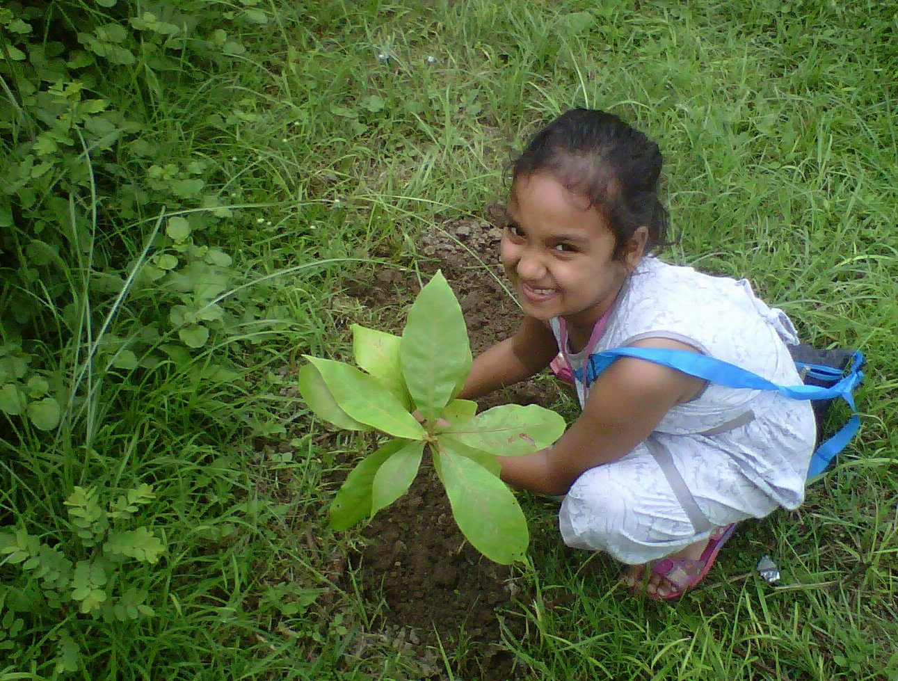 Planting fruit trees in India to fight hunger, poverty and climate change.