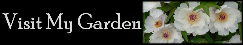 Visit My Garden
