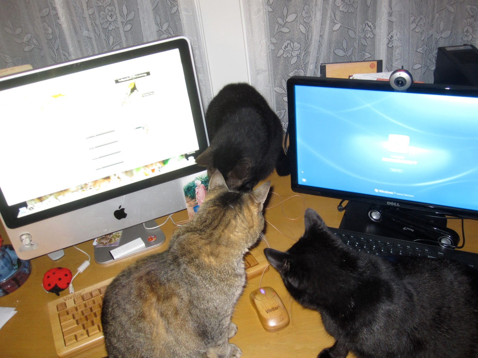 Dog College Pets Site Reddit Com R Lpt