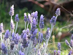 Ver Remedios naturales para los ronquidos