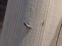 Ladybird+Larvae-Compton+Verney-Gary+Webb