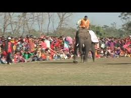 Elephant football championship in Nepal - no comment