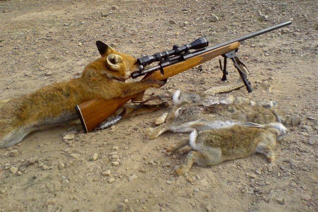 banyak kucing yang telah berhasil ditembak mati diujung senjata anjing