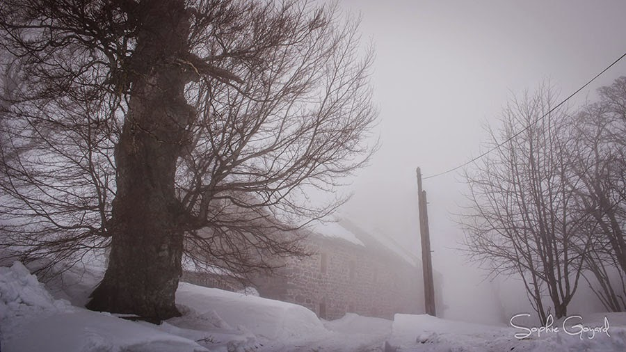 Paysage hivernal photographie