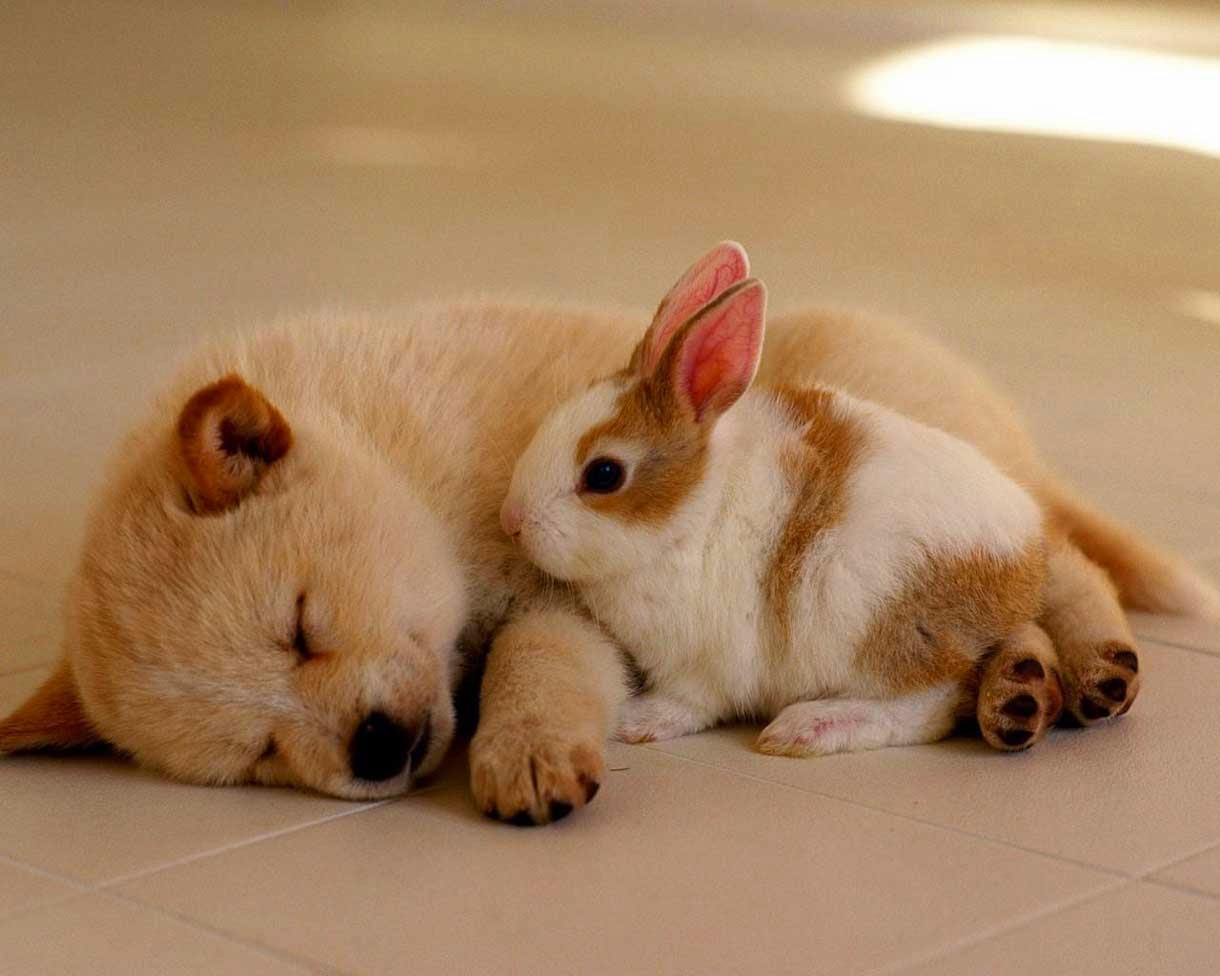 Rabbit and Dog baby Sleeping with Love