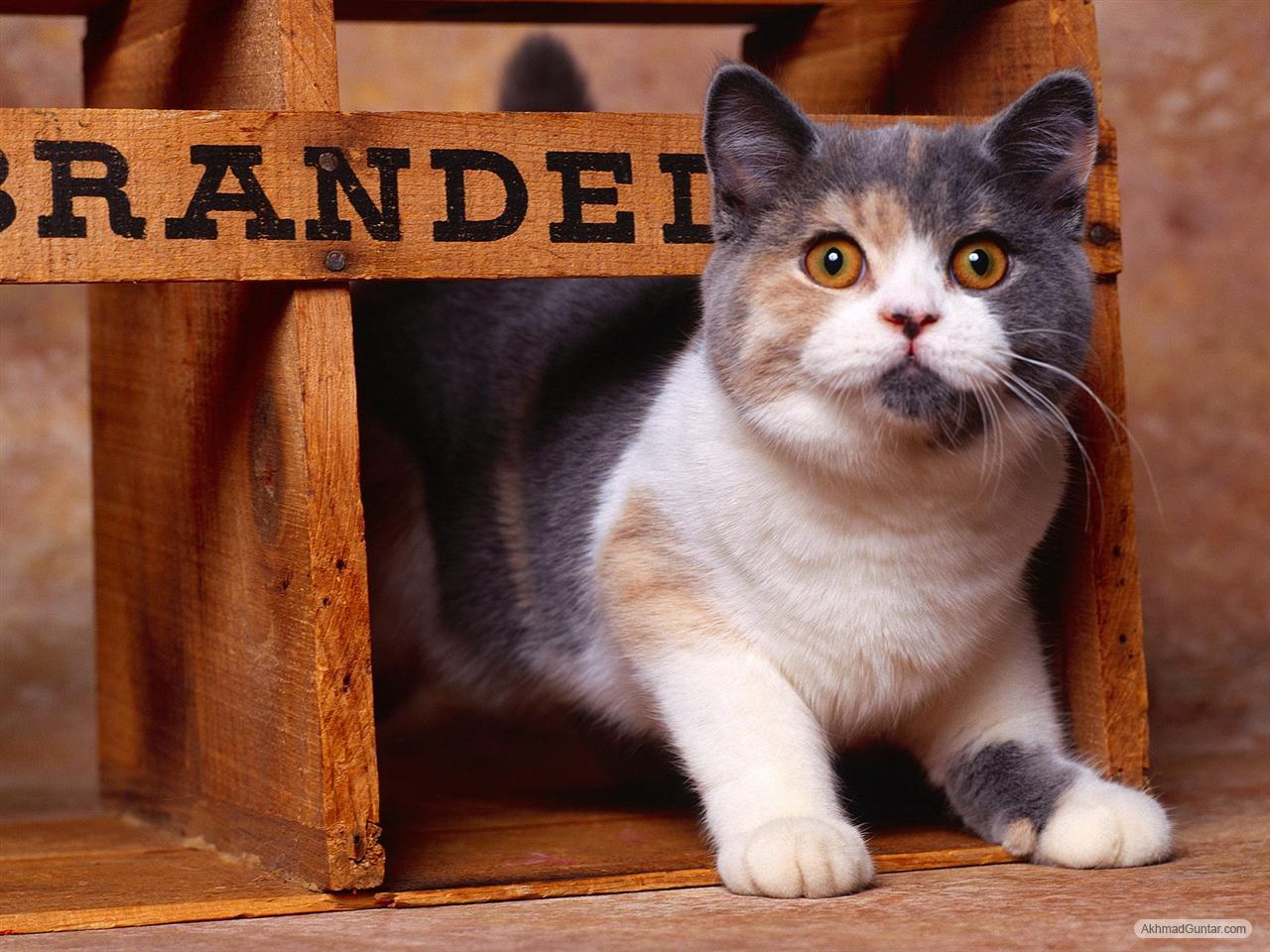 Perawatan Kucing Kucing Imut Lagi Merayap