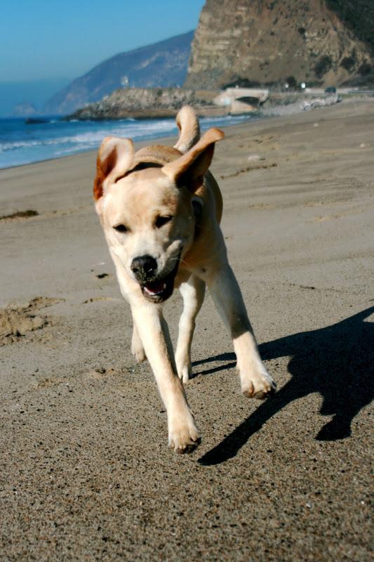 Beach puppy Cooper