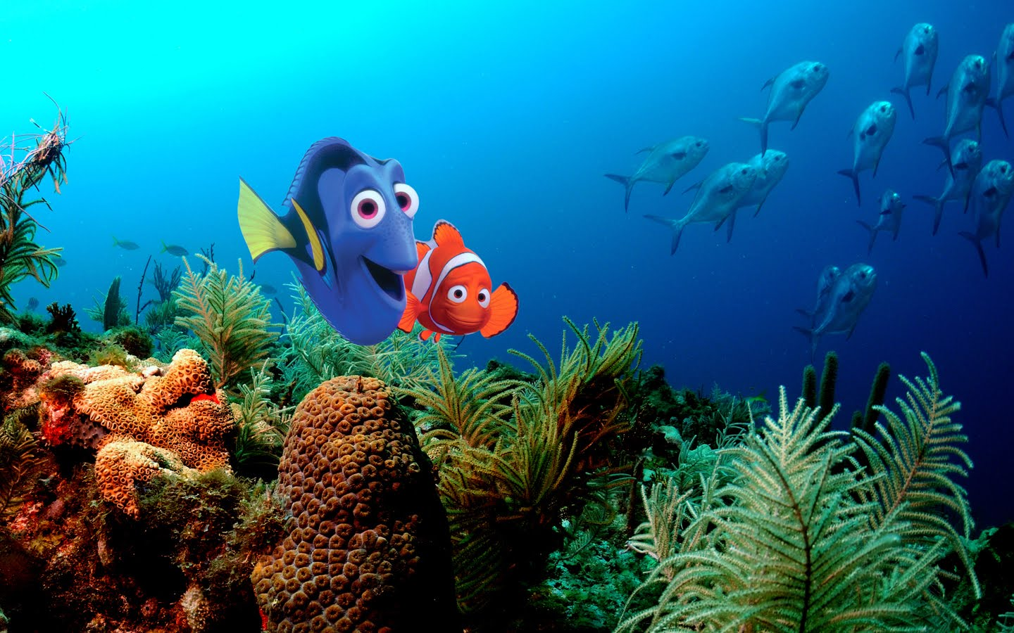 finding nemo hd wallpapers - photo #5