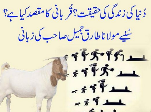 qurbani ke masail ka encyclopedia, qurbani ke masail urdu books, qurbani kay masail urdu, qurbani ka masail, qurbani ke fazail, qurbani k masail, eid ul azha qurbani videos, eid ul azha qurbani 2016, eid ul azha qurbani 2015, eid ul azha qurbani videos funny, eid ul adha in urdu essay, eid ul adha in urdu speech, eid ul adha in urdu language, essay on eid ul adha for kids in urdu, eid ul adha qurbani, eid ul adha 2015 uae, eid ul adha history