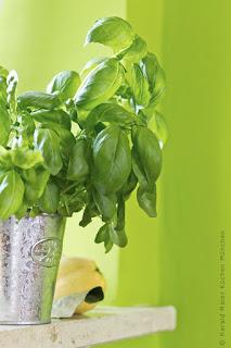 Wandfarbe, grün, modern, frisch, jugendlich, Farbauswahl, Küchendesign, Wohnideen, Ideen für die Küche