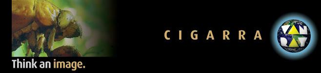 cigarra van ray