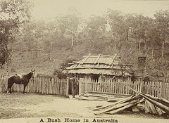 photo of bush home in Australia 1895