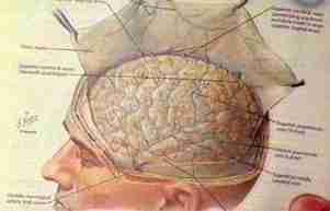 Αμφισβητώντας τον Δαρβίνο: Διαφωνία σχετικά με την εξέλιξη του Νου,εγκέφαλος, εξέλιξη, νευροεπιστήμες, νευροεπιστήμη, νους