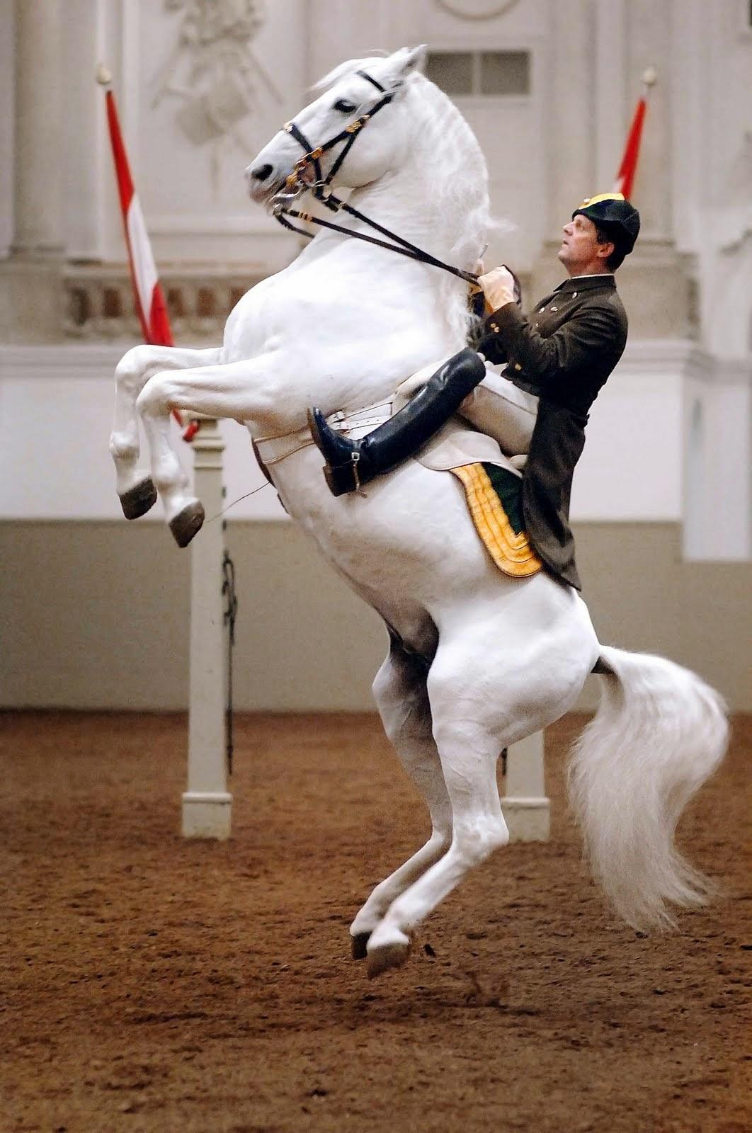 un cavalier de l'école équestre espagnole de Vienne