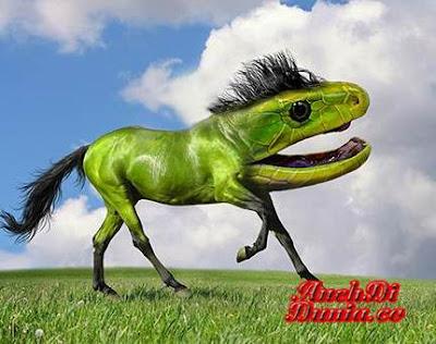 Keajaiban photoshop terhadap Hewan