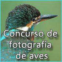 Concurs de fotografia d'ocells: