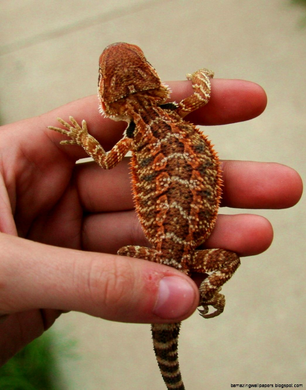 how to sell bearded dragons