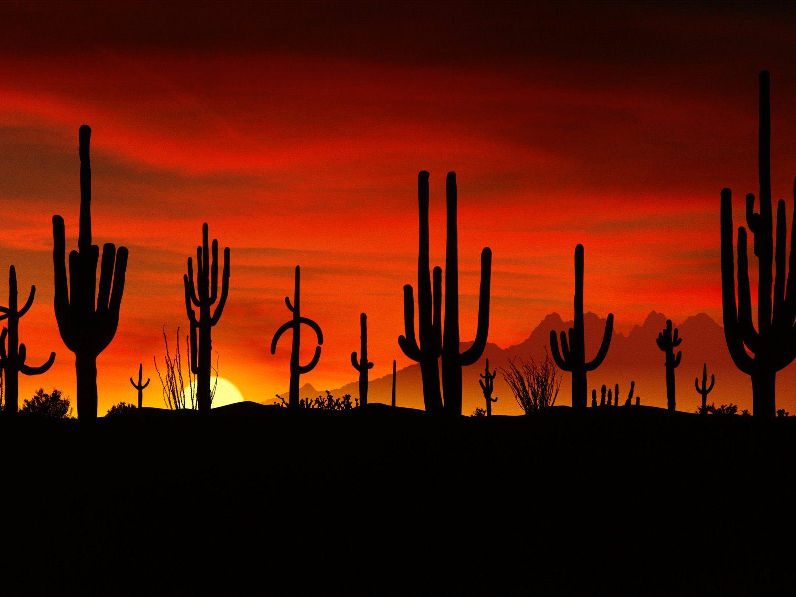 I write Arizona