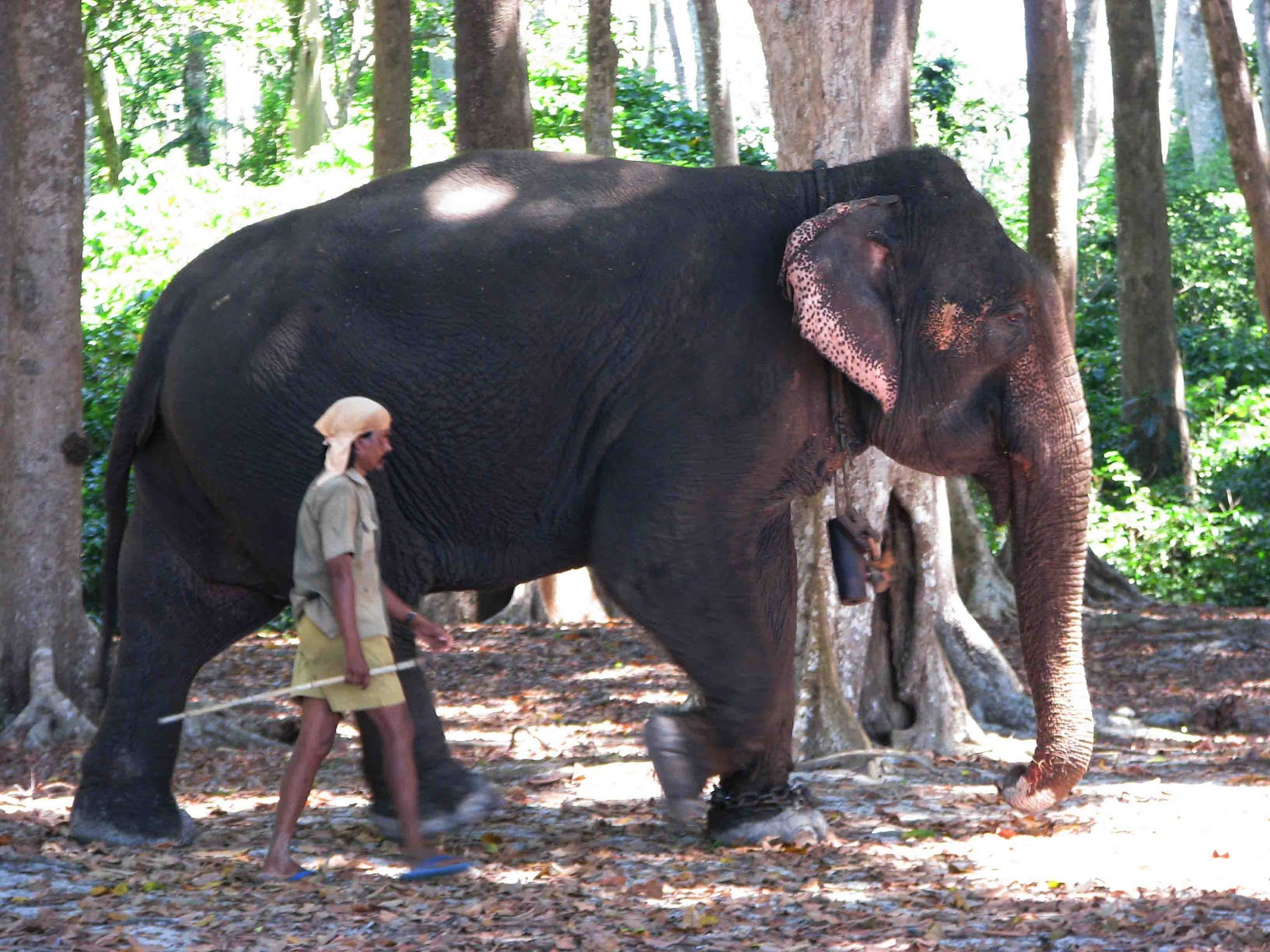 Weight of an asian elephant for