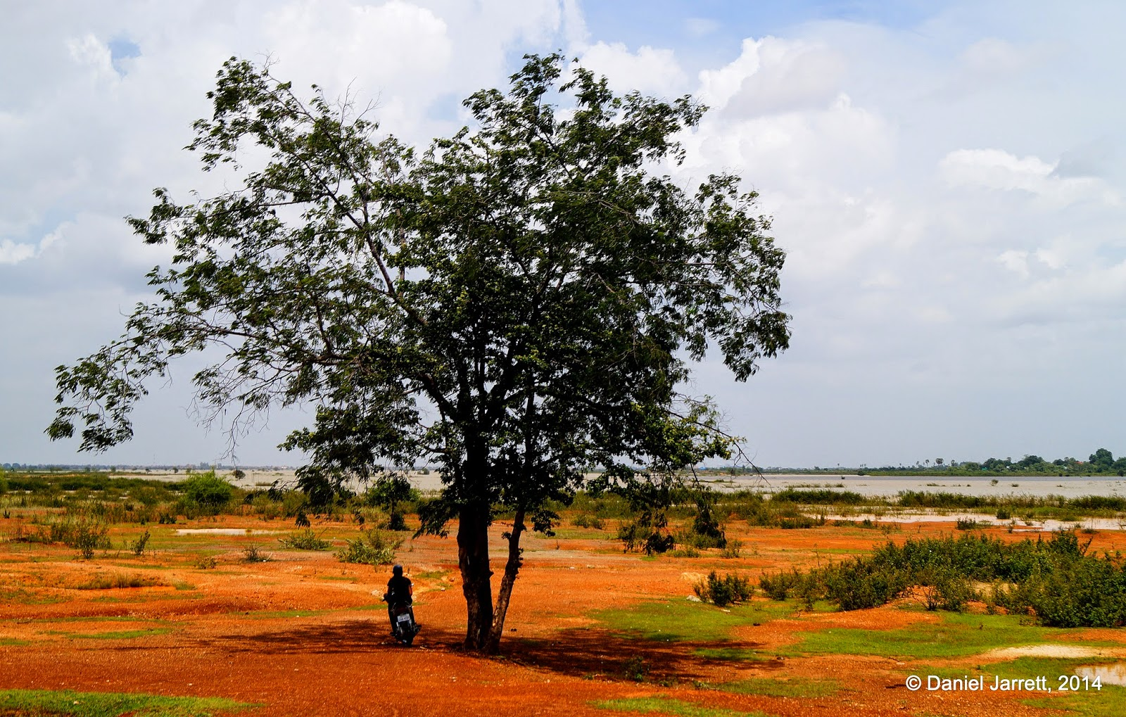 Man under tree, Cambodia