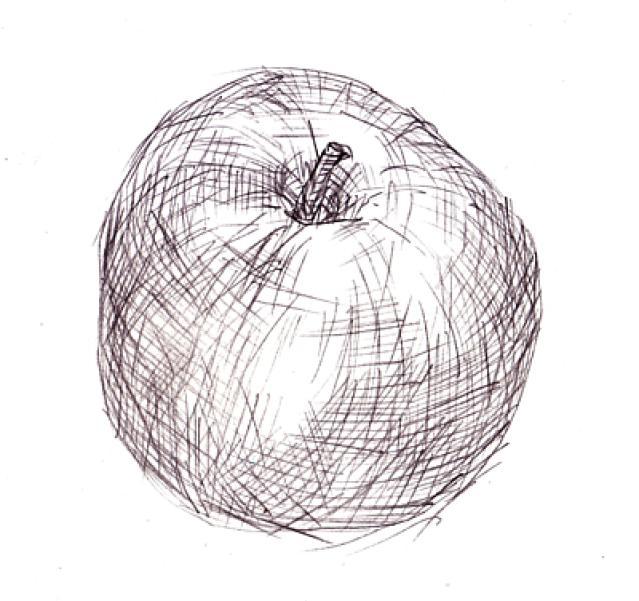 Contour Line Drawing Apple : Meramec choice art drawing studio