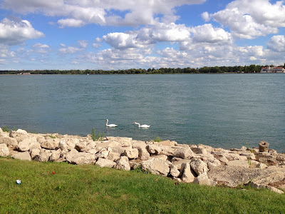 Detroit River and two swans
