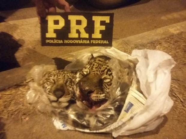 Além das cabeças, a PRF também encontrou os rabos dos animais (Foto: Divulgação/PRF)