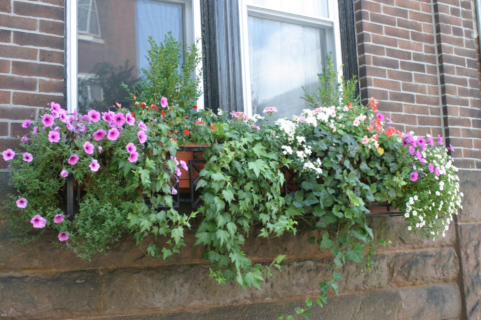julie 39 s journeys philadelphia window flower boxes. Black Bedroom Furniture Sets. Home Design Ideas