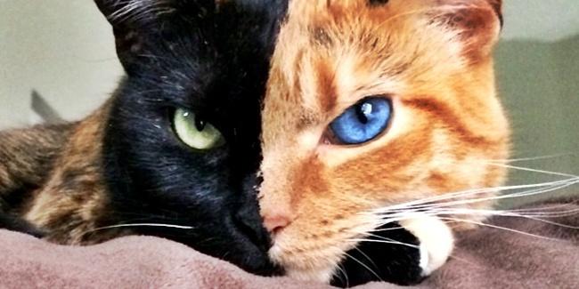 Ini Dia 8 Kucing Yang Mempunyai Warna Mata Berbeda Namun