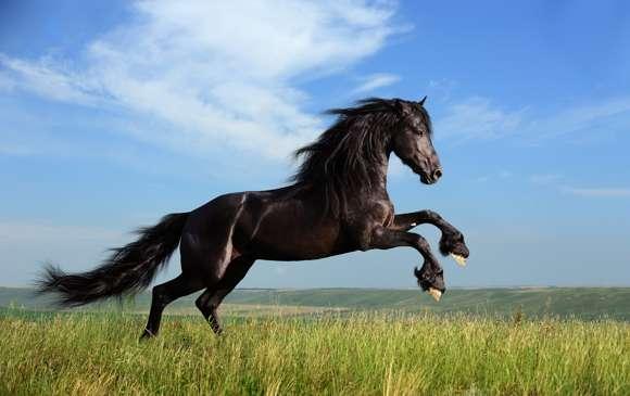 Gambar Foto Kuda