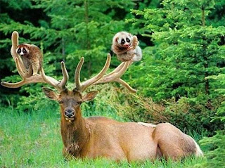 Funny Animal Friendship