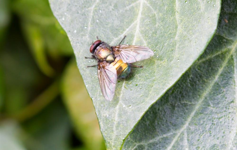 bristol fly control