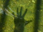 Sombra en el agua