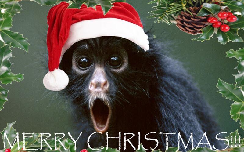 On A Rainy Night....: Christmas Monkey's
