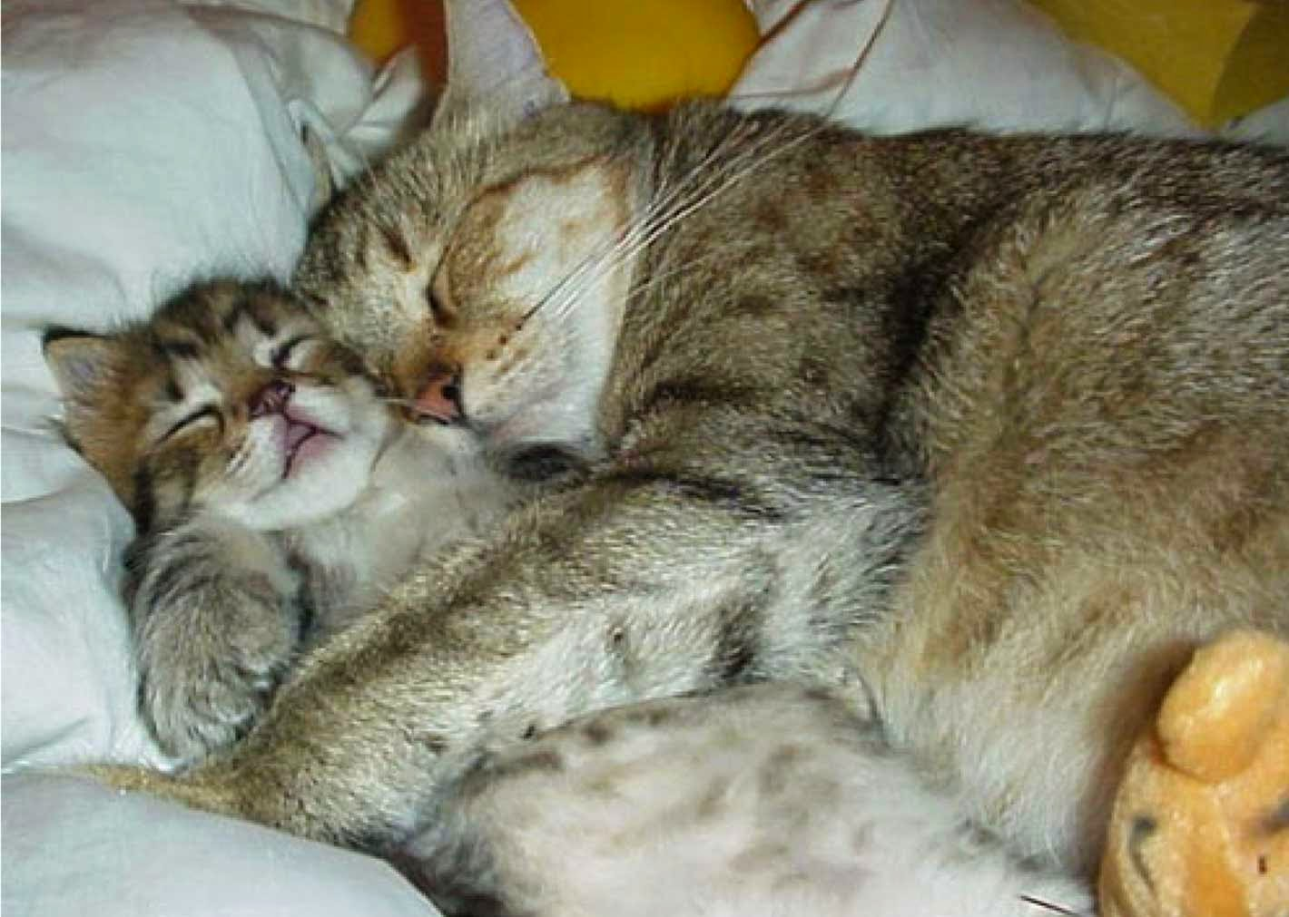 Cute Cats Sleeping with Love Wallpaper