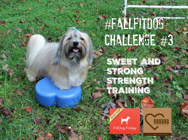 #FallFitDog FitDog Friday Fall Fitness Challenge with About Strength Training